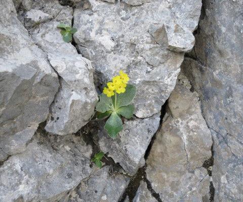 Klettern bei Chlus (Böli)